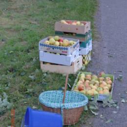 Apfelpflücken_10_gedreht